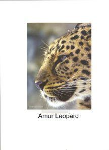 amurLeopard0004